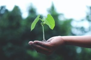 laurea in sostenibilità